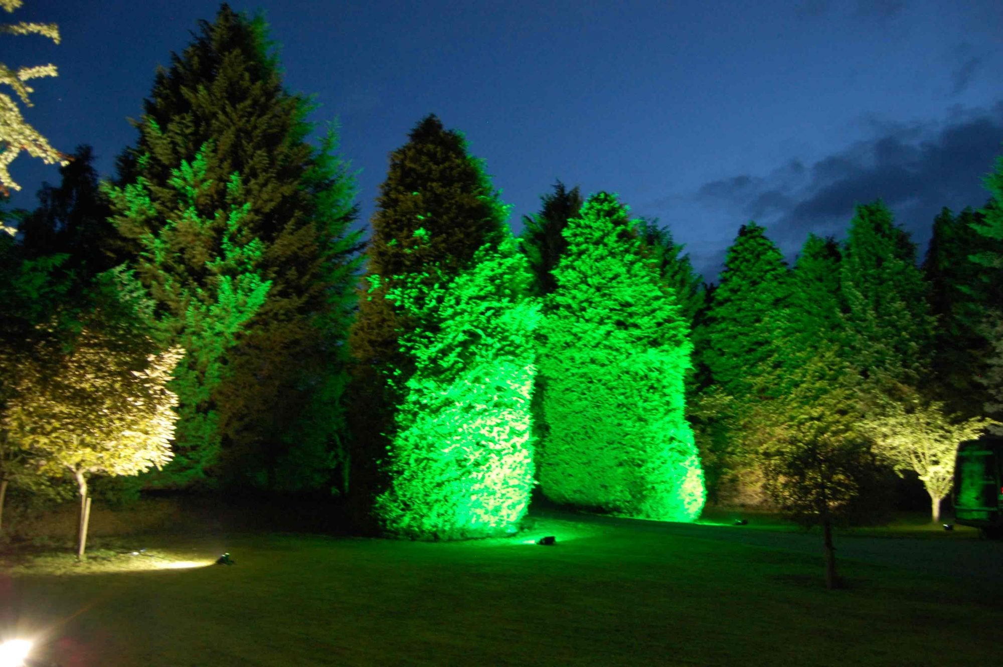 Green Tree Uplighting Hire - Bedfordshire, Buckinghamshire, Hertfordshire